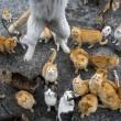 Aoshima isola dei gatti: per ogni umano ci sono 6 felini 20