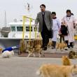 Aoshima isola dei gatti: per ogni umano ci sono 6 felini 03