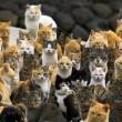 Aoshima isola dei gatti: per ogni umano ci sono 6 felini 04