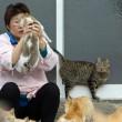 Aoshima isola dei gatti: per ogni umano ci sono 6 felini 07