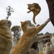 Aoshima isola dei gatti: per ogni umano ci sono 6 felini 08