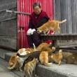 Aoshima isola dei gatti: per ogni umano ci sono 6 felini 09