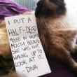 """Gatti disobbedienti """"umiliati"""" per i loro """"crimini"""" FOTO 4"""