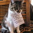 """Gatti disobbedienti """"umiliati"""" per i loro """"crimini"""" FOTO 2"""