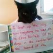 """Gatti disobbedienti """"umiliati"""" per i loro """"crimini"""" FOTO"""