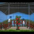 Le Iene, pesticidi in frutta e verdura 02