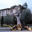 Maltempo Toscana-Marche: scuole chiuse, tetti scoperchiati, alberi abbattuti FOTO-VIDEO