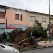 Maltempo Toscana-Marche: scuole chiuse, tetti scoperchiati, alberi abbattuti FOTO-VIDEO2