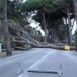Maltempo Toscana-Marche: scuole chiuse, tetti scoperchiati, alberi abbattuti FOTO-VIDEO3