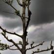Maltempo Toscana-Marche: scuole chiuse, tetti scoperchiati, alberi abbattuti