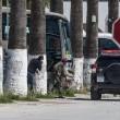 Attacco museo Bardo di Tunisi: FOTO arresto di uno dei terroristi 08