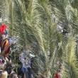 """Domenica delle Palme, Papa Francesco: """"Siate umili""""03"""