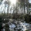 Vallombrosa, maltempo fa strage di alberi di Natale02