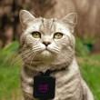 Catscam, macchina fotografica su collare gatto: FOTO su Instagram09