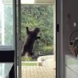 """Gatto """"Mission Impossible"""" scala la finestra della cucina VIDEO"""