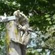 varano australiano divora coniglio 04