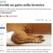 Pato, il gatto ucciso nella lavatrice