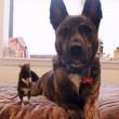Topo Riff e il cane Osiris sono amici per la pelle02