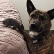 Topo Riff e il cane Osiris sono amici per la pelle08