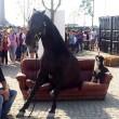 Expo, cavallo stanco si siede su divano all'entrata02