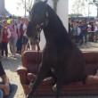 Expo, cavallo stanco si siede su divano all'entrata