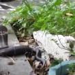 VIDEO YouTube: cobra in giardino, gatto decide di affrontarlo 02