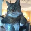 Gatti nelle ciotole, nelle insalatiere, nelle brocche, nelle ceste... FOTO 6