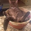 Gatti nelle ciotole, nelle insalatiere, nelle brocche, nelle ceste... FOTO 3