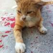 Gatto ferito in mezzo alla strada, tra le macchie di sangue. O forse no... FOTO
