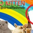 #Gattosulmatto: Beppe Grillo come Salvini attaccato dai gattini su Facebook FOTO 3