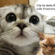 #Gattosulmatto: Beppe Grillo come Salvini attaccato dai gattini su Facebook FOTO 4