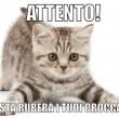 #Gattosulmatto: Beppe Grillo come Salvini attaccato dai gattini su Facebook FOTO 7