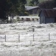 VIDEO YouTube. Australia, piovono ragni: la distesa di ragnatele a Goulburn FOTO