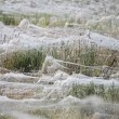 VIDEO YouTube. Australia, piovono ragni: la distesa di ragnatele a Goulburn FOTO 2