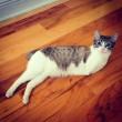 VIDEO YouTube. Roux, gattino con due zampe che sembra un coniglio 5
