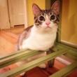 VIDEO YouTube. Roux, gattino con due zampe che sembra un coniglio 4
