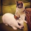 VIDEO YouTube. Roux, gattino con due zampe che sembra un coniglio 3