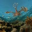 VIDEO YouTube - Google Maps ti porta... in fondo al mare 02