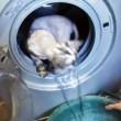 Gatto messo all'interno della lavatrice da un gruppo di ragazzini02