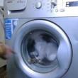 Gatto messo all'interno della lavatrice da un gruppo di ragazzini