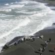 California, il mistero delle balene morte sulla costa