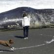 California, il mistero delle balene morte sulla costa02