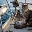 Matt e Jessica Johnson, giro del mondo in barca con la gatta FOTO 4