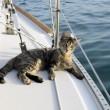 Matt e Jessica Johnson, giro del mondo in barca con la gatta FOTO 5