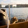 Matt e Jessica Johnson, giro del mondo in barca con la gatta FOTO