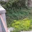 Genova: Bisagno, tutto fermo. Dopo Burlando tocca a Toti, la stagione delle piogge è vicina 5