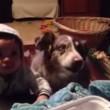 """VIDEO YouTube: cane affamato dice """"mamma"""" prima del bimbo, lui non la prende bene3"""