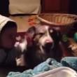 """VIDEO YouTube: cane affamato dice """"mamma"""" prima del bimbo, lui non la prende bene2"""