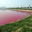 Cina, lago si tinge di rosa: turisti incantati FOTO