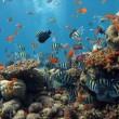 VIDEO YouTube - Google Maps ti porta... in fondo al mare 03